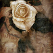 Grungy rose — Stock Photo