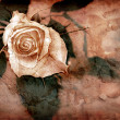 Stockfoto: Rose in grungy style