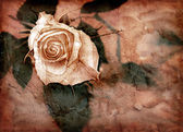 Rose in grungy style — Stock Photo