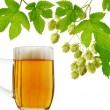 Glass of beer and hops — Stock Photo #2617037