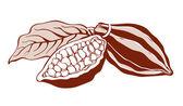 Cacao beans — Stock Vector