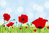 Poppy Field — Stock Vector