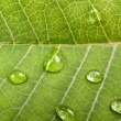 Water drops on a green leaf — Stock Photo #2246494