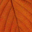 Stock Photo: Red leaf texture