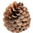 One pine cone - Stock Photo