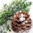 Fir branch and cone laying on snow — Stok fotoğraf