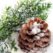 Fir branch and cone laying on snow - Stockfoto