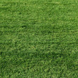 Fresh green grass — Stock Photo #2304556