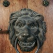 Metal door  knocker as lion — Stock Photo