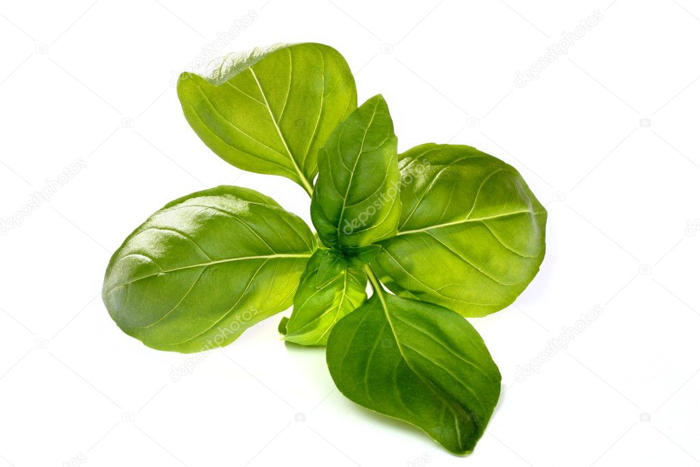 Perfect fresh basil isolated on white background — Stock Photo #2300368