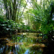 Stock Photo: Jungle Scenery