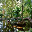 Stock Photo: Jungle Pond
