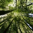 Bamboo Forest 1 — Stock Photo