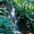Stock Photo: Jungle Waterfall