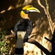 Stock Photo: Rhino Toucan