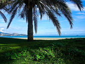 Beach and Sea View From Under a Palm Tre — Stock Photo