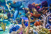 Underwater - Corals — Stock Photo