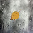 Rain on window with leaf - Stock Photo
