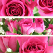 Three Pink Roses Landscape Images - Stock Photo