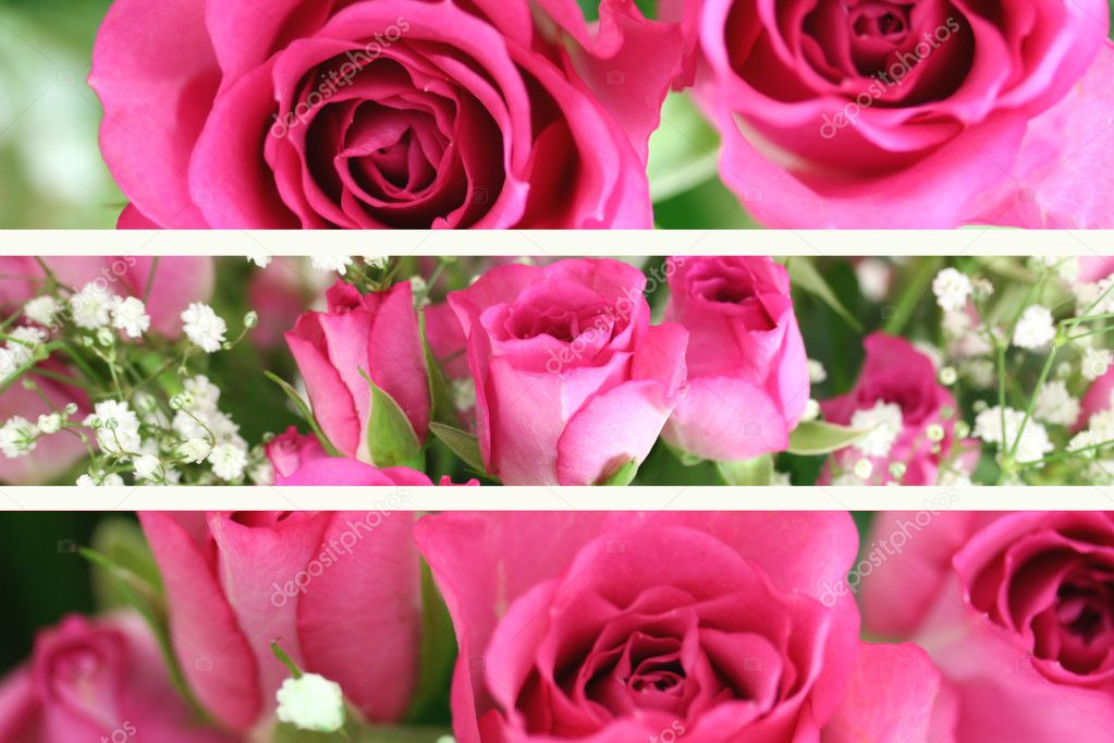 Three Pink Roses Landscape Images  Stock Photo #2240234