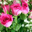 Pink roses bouquet close up — Stock Photo