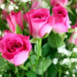 Pink roses bouquet close up - Stock Photo