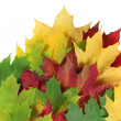 Autumn leaves spread with white space — Stock Photo