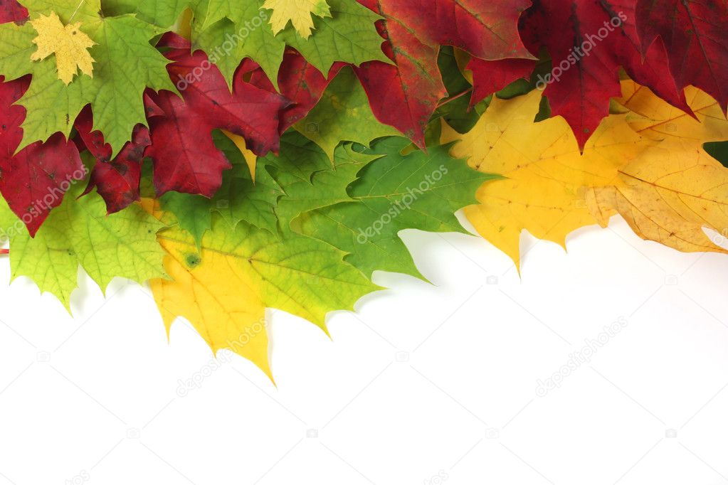 Autumn leaves on edge with white space  Stock Photo #2374356
