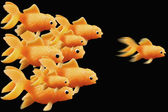 Goldfish ahead of the race — Stock Photo