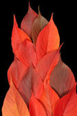 Red autumn leaf flame — Stock Photo