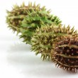 Stock Photo: Spiky fruit in a line