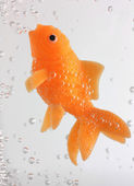 Goldfish swimming with bubbles — Stock Photo