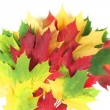 Stock Photo: Autumn leaves splay with white space