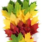 Autumn leaves in a fan shape — Stock Photo