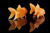 Two goldfish swimming away — Stock Photo