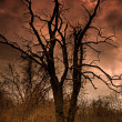 A Dead Tree In Satan's Backyard — Stock Photo