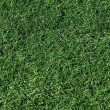 Royalty-Free Stock Photo: Artificial grass