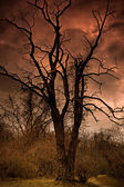 A Dead Tree In Satan's Backyard — Stock Photo