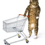 Consumer cat — Stock Photo