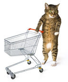 Consumer cat — Stock Photo
