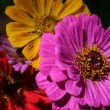 Flowerage - purple, yellow, red — Stock Photo