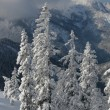 Winter mountain view — Stockfoto