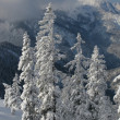 Winter mountain view — Stock Photo