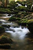 поток с валунов в лесу — Стоковое фото