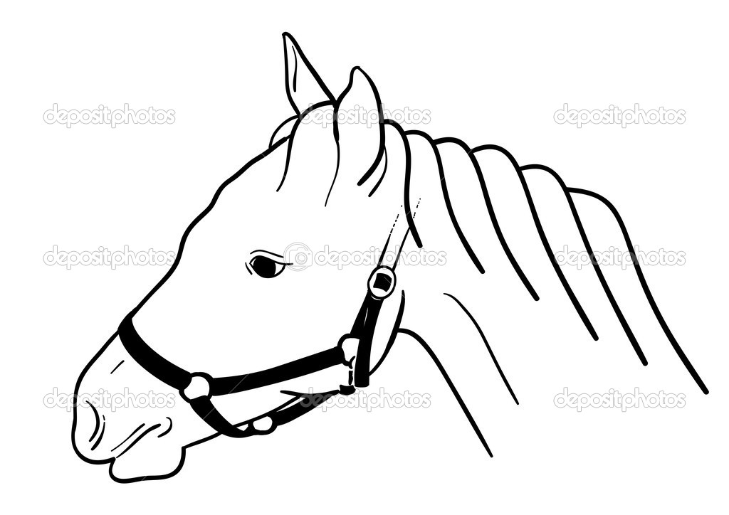 Horse head isolated on the white. — Stock Vector #2617736