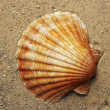 Royalty-Free Stock Photo: Shell on the sand