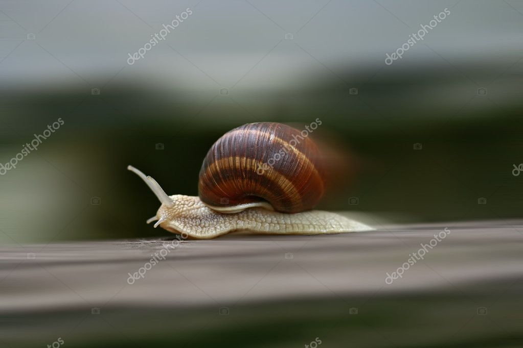 Shot of the speeding snail — Stock Photo #2261375