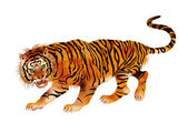 Walking tiger — Stock Vector