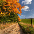 Stock Photo: Country road and autumn trees