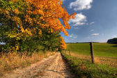 Country road and autumn trees — Stock Photo